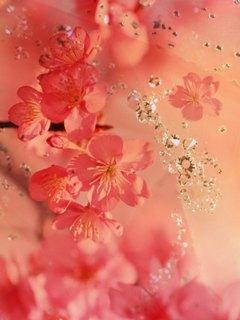 Ещё одна картинка на цветочную тематику для наших мобильников